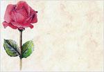 4-rose