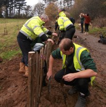 Tree Planting Dec 2011 action