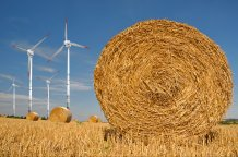 Bioenergy renewables image