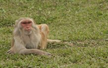 Macaque isolation