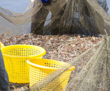 Shrimp farm shutterstock main
