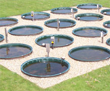 phytoplankton ponds main