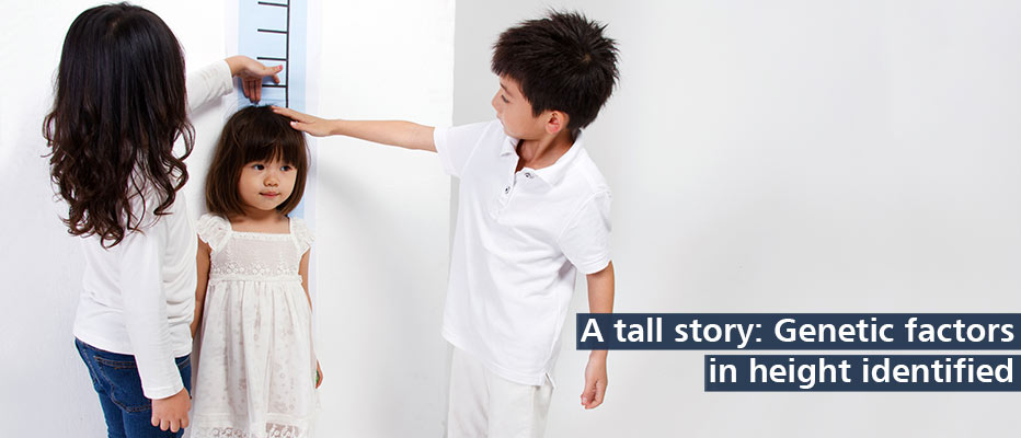 Find out more about our height genes research