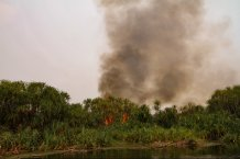 One of many fires on the banks of the Sabangau river credit Abi Gwynn