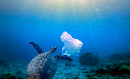 credit Making Oceans Plastic Free